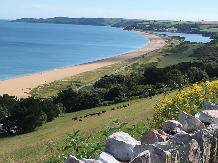 guided walks in devon with viv robinson registered blue badge tour guide